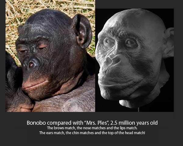 a comparison of the dna of human beings and chimpanzees Percentage of genetic similarity between humans and animals  (995% similarity) - chimpanzees are 96% to 98% similar to humans,  y-dna haplogroup i am human.