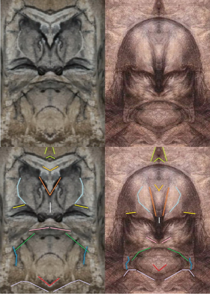 Chauvet, Egypt, Da Vinci and Mars. Is there a link?, page 1 Da Vinci Paintings Mirrored