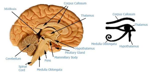 Pineal Gland & Symbolism, page 1