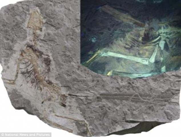 Massive Dinosaur Soft Tissue Discovery In China - Includes