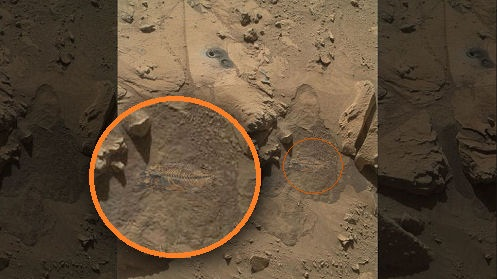 'Fish Fossil' Found by NASA's Mars Rover; 'Greatest ...