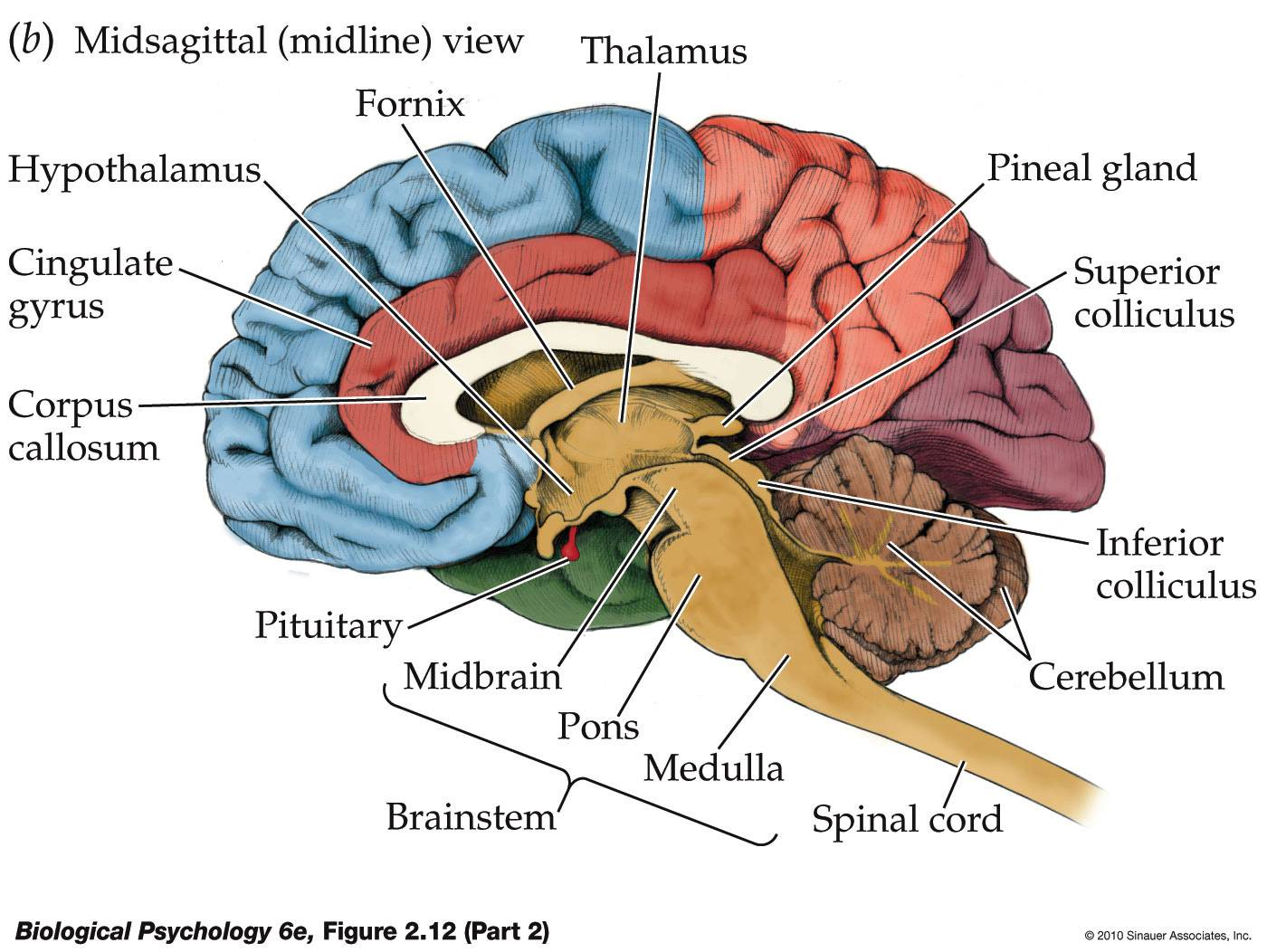 making procrastination useful the workings of the brain : inferior brain diagram - findchart.co