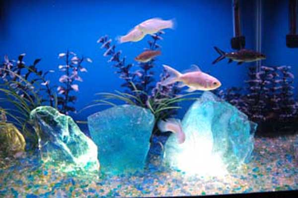 Glass rock found in woods photos embedded need expert - Glass stones for fish tanks ...
