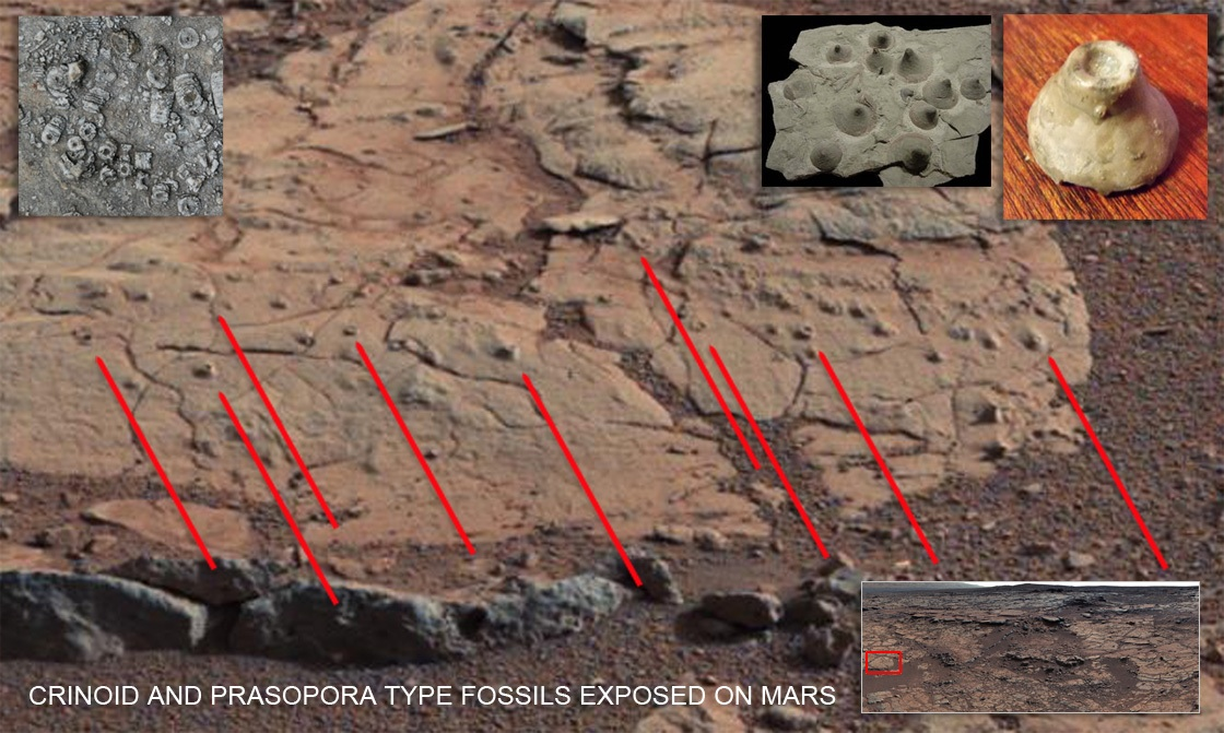 MARS: Crinoid and Prasopora Fossils Exposed, page 1