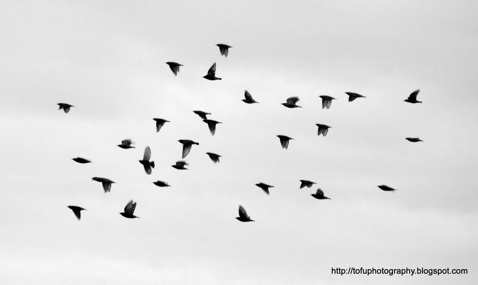 Flying birds silhouette tumblr