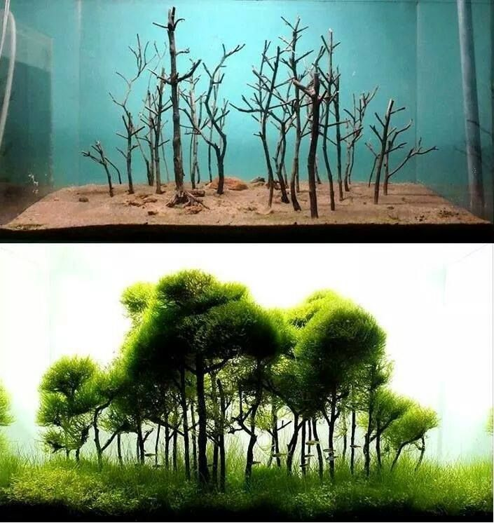 The Magical World of Aquascaping/Living Terrariums (WITH ...