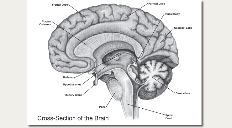 Pine cone and third eye symbolism page 3 to me this is clearly third eye symbolism depicting a cross section of the human brain to the right where the hand of god penetrates the third eye ccuart Images