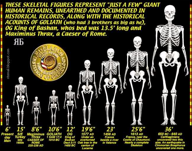 neanderthals were more advanced than us. they were one of the, Skeleton