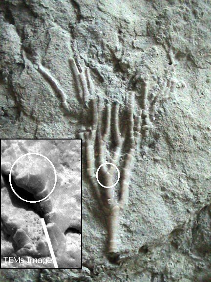 The Case For Past Life On Mars  Revisiting The Fossil