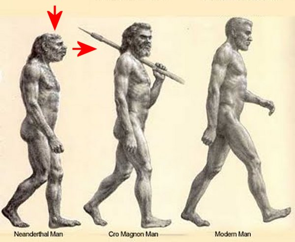 comparing and contrasting neanderthals and modern