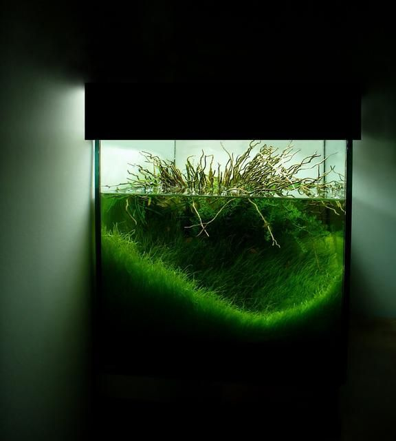 The Magical World Of Aquascaping/Living Terrariums (WITH