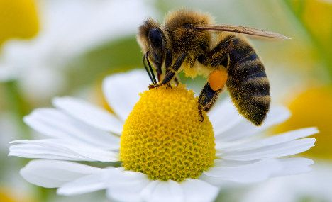 As The Climate Grows Warmer Flowers Are Blooming Earlier In Spring And This Year Many German Honeybees Awoke To Find Blossoms Already Gone