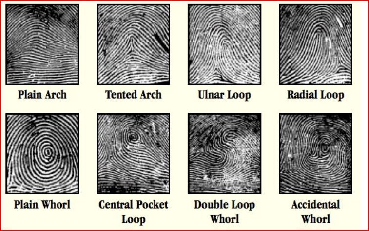 11 fingerprint patterns pattern finger print 2016
