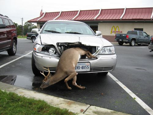 Deer Hits Car, Then Things Turn Weird (Connecticut), Page 1