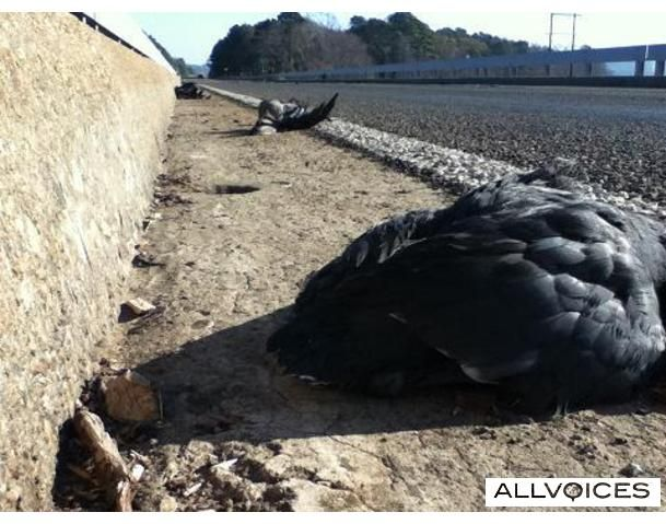 Now east texas also reports hundreds of dead birds page 1 for Lake o the pines fishing report