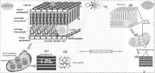 new artificial leaf can produce 80x more hydrogen   page 1
