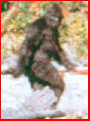 bigfoot fact or fiction However, there are some myths, like the bigfoot, where we know a little more  about the myth so, we need to ask whether bigfoot is a myth or a.