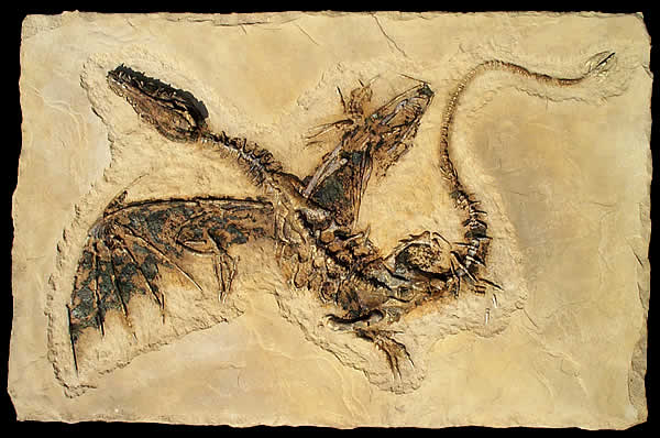 Dragon Fossil