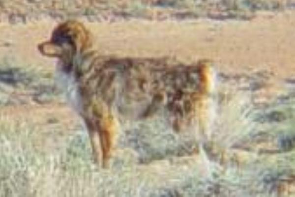Picture of wild dog near Skinwalker Ranch    - Ghosts